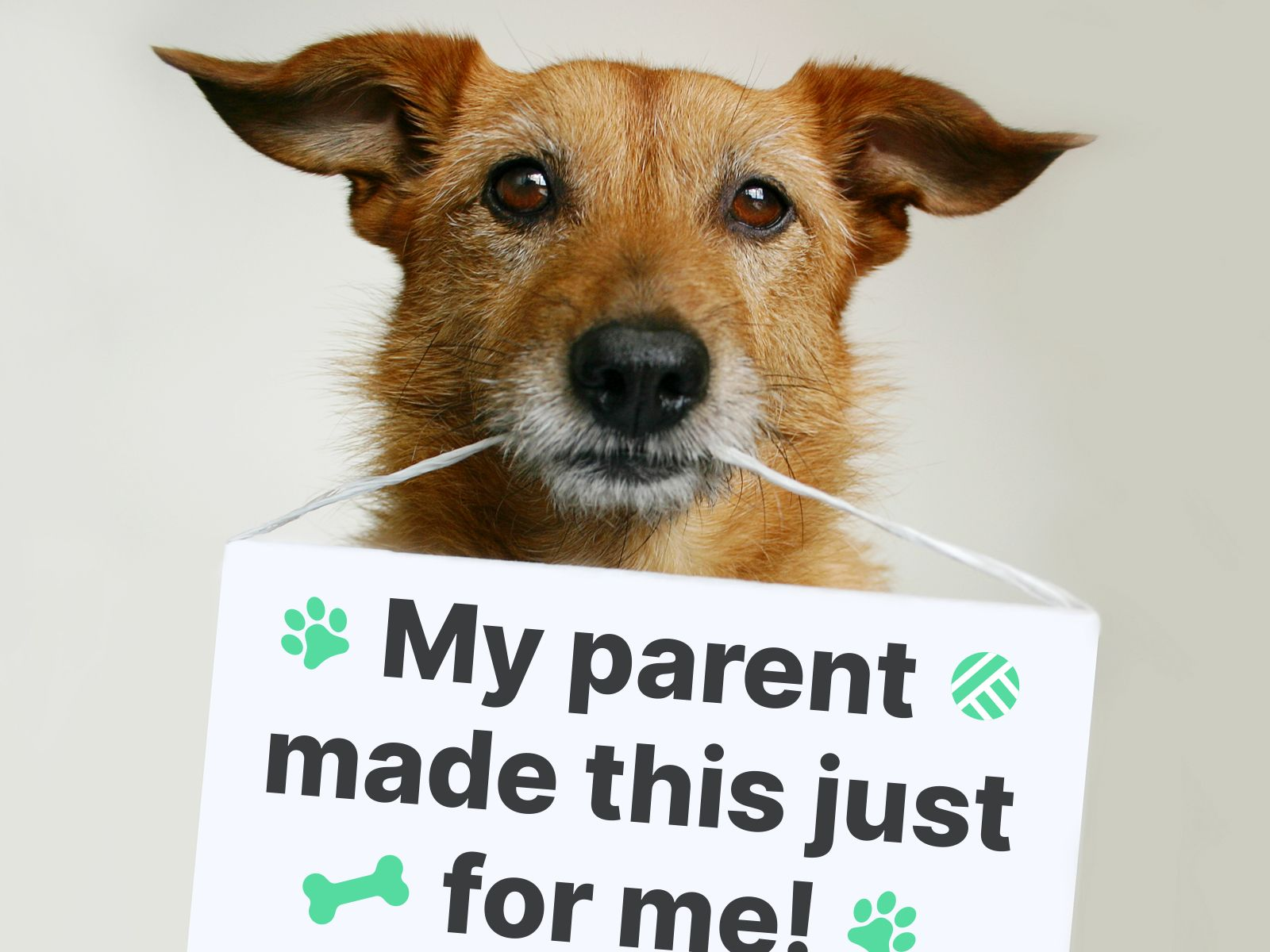 A small dog holding a sign in his mouth that reads My parent made this just for me